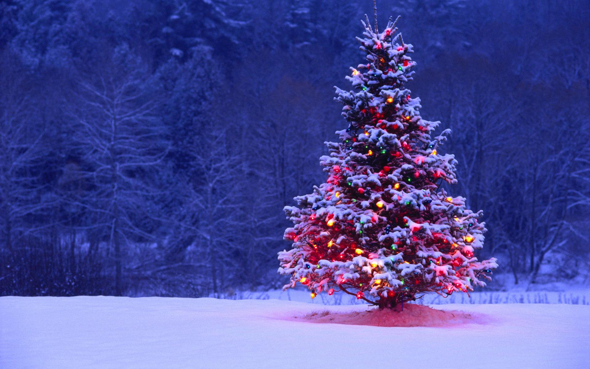 До1декабря наплощадях и дорогах Ростова установят новогодние ёлки