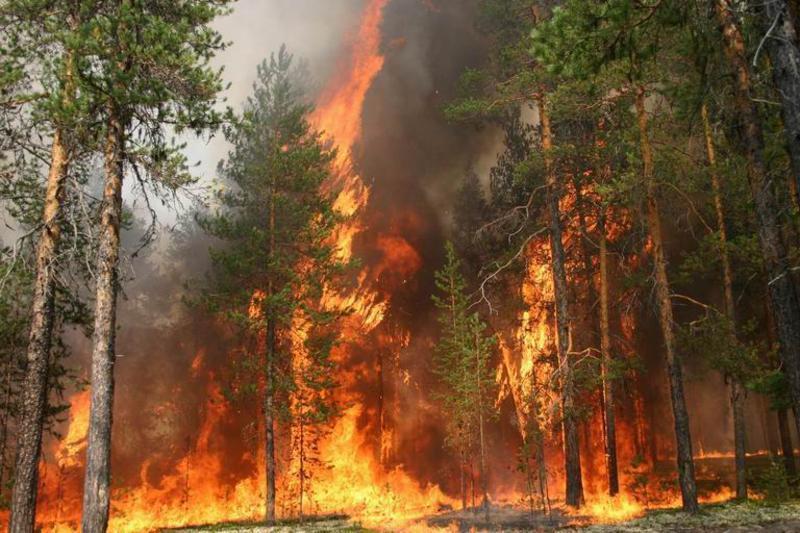 ВУсть-Донецком районе полыхает 20 гектаров лесного массива