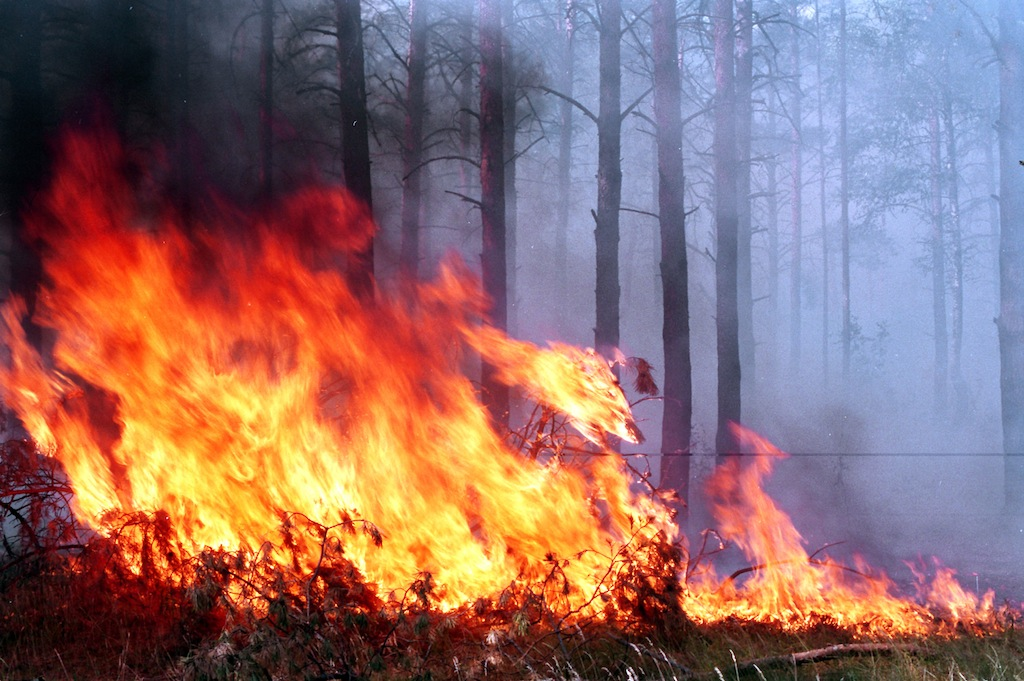ВРостовской области объявили экстренное предупреждение из-за чрезвычайной пожароопасности