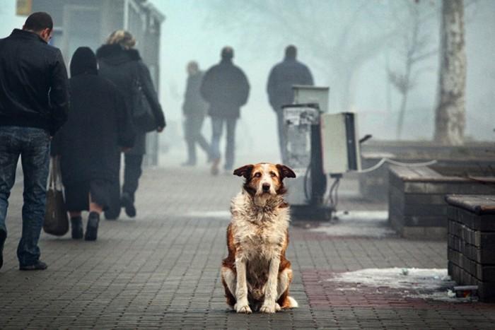 Вприюте Ростова-на-Дону найдены сотни тел животных