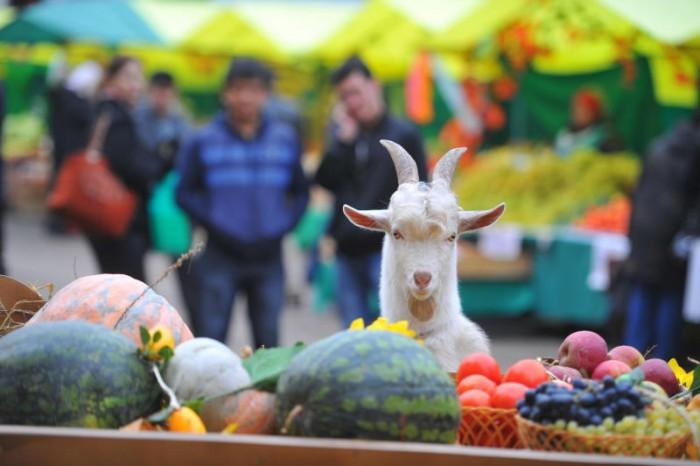 Натерритории ДГТУ вРостове пройдет продовольственная ярмарка