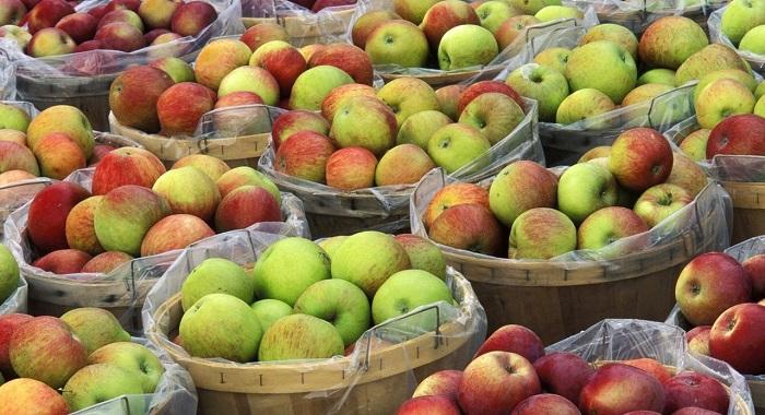 Неменее 19 тонн запрещенных кввозу яблок уничтожено наДону