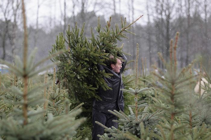 ВРостовской области двоих мужчин задержали завырубку сосен