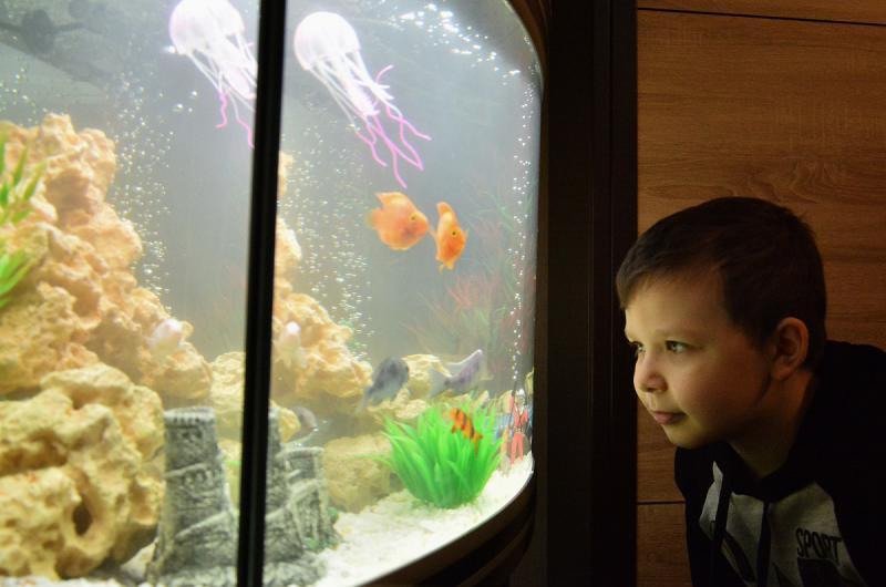 Сергей Горбань вручил юному ростовчанину аквариум от президента РФ