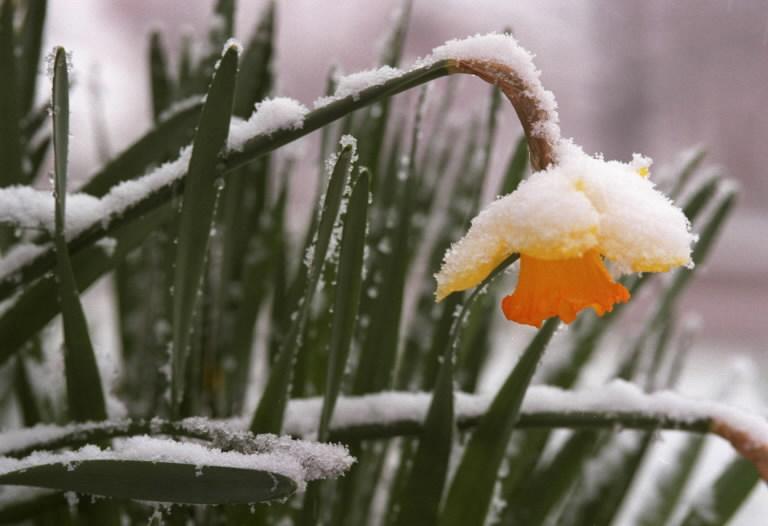 Ночные заморозки ударят поРостовской области,— МЧС