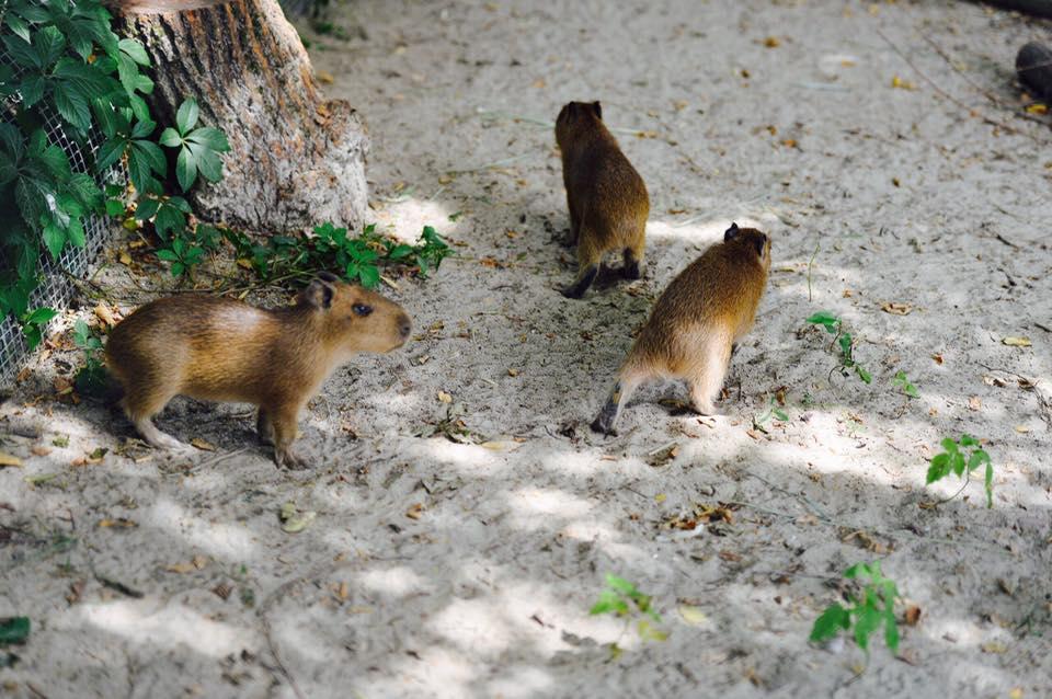 Вростовский зоопарке стартовала программа опекунства над животными
