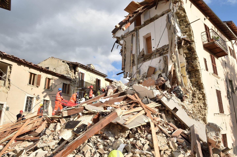 ВИталии пожарные спасли кошку, 5 дней просидевшую под завалами после землетрясения