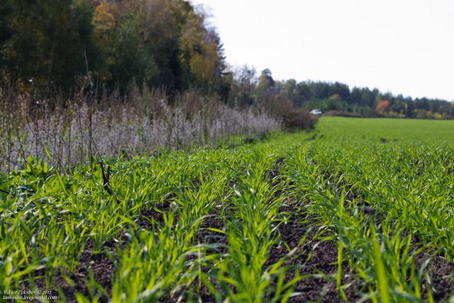 Пензенские аграрии засеяли озимыми культурами 140 тыс. га