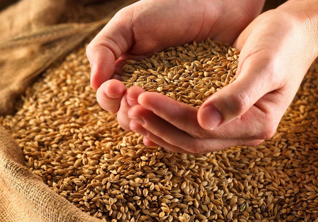 Ростовская область собрала неменее 11,7 млн тонн зерна— Исторический рекорд