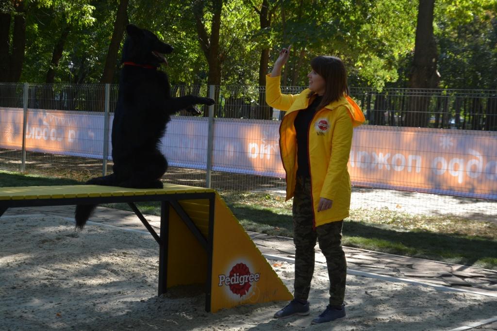 ВРостове открылась первая площадка для выгула собак