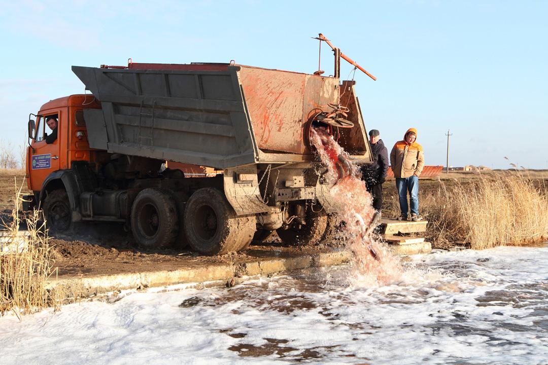 Власти поведали, зачем вдонской водоем выпустили 20 тонн толстолоба