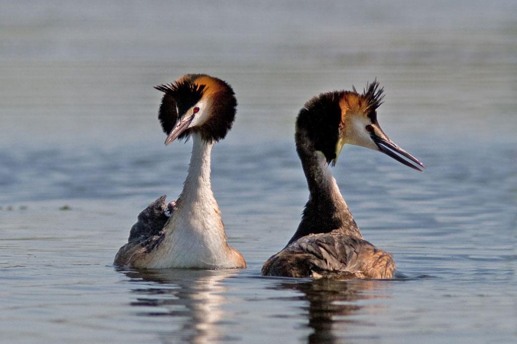 ВТаганроге граждан беспокоит массовая смерть птиц