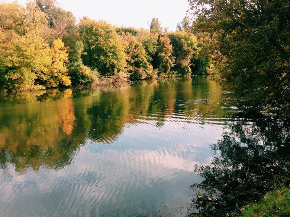 Наберегу реки Темерник вРостове заложили экопарк