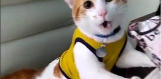"""Кот кричит """"Гол!"""" //Скриншот из видео @proyectonala в Instagram"""