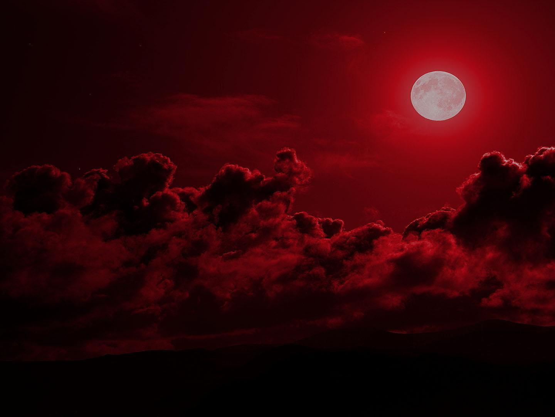 латакию картинка кровавой ночи растение