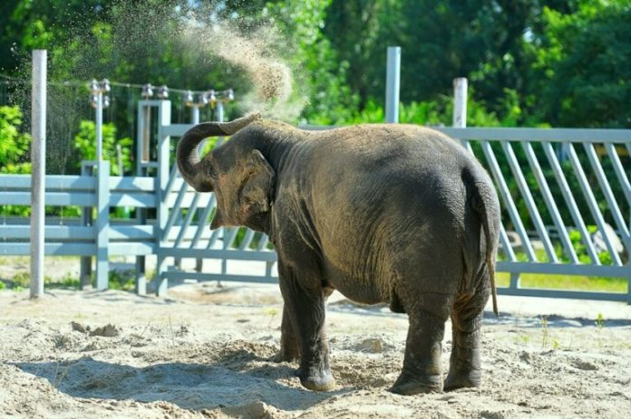 Слон//Фото: пресс-служба Ростовского зоопарка