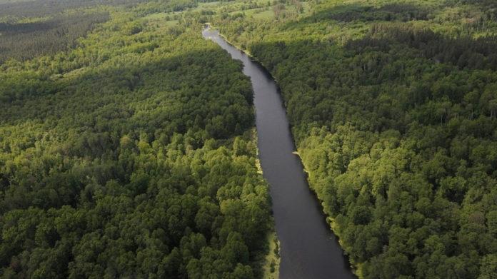 Лес , деревья//Фото: РИА Воронеж