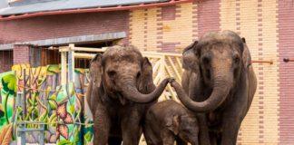 Слоны, слон//Фото: пресс-служба Ростовского зоопарка