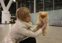 В аэропорту Платов выросло количество пассажиров, путешествующих с животными //Фото: пресс-служба аэропорта Платов