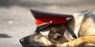 Служебная собака//Фото: Myslo