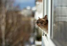 Кот на солнце//Фото: Создать мем