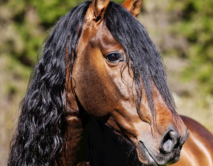 конь//Фото: Вокруг света