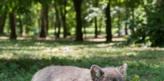 //Фото: официальный сайт Ростовского зоопарка во Вконтакет