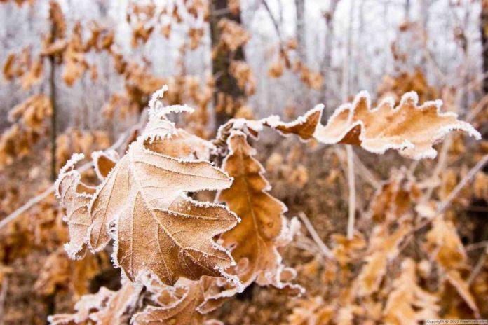Осень//Фото: stihi.ru
