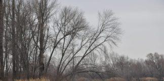 Река Дон//Фото: Mapio.net
