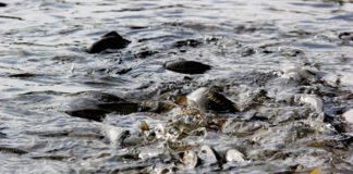 Рыбоходный канал//Фото: Яндекс.Картинки