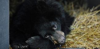 Медведь//Фото: сноб