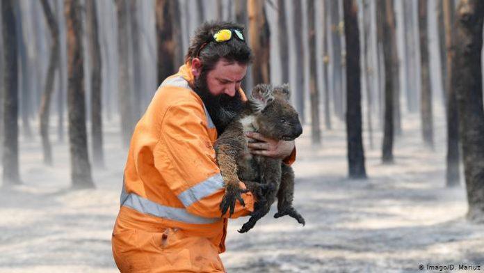 Пожары в Австралии//Фото: DW