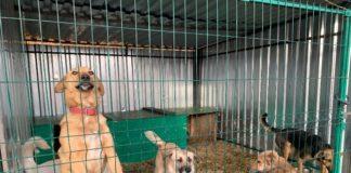 Приют для бездомных животных//Фото: администрация Новочеркасска