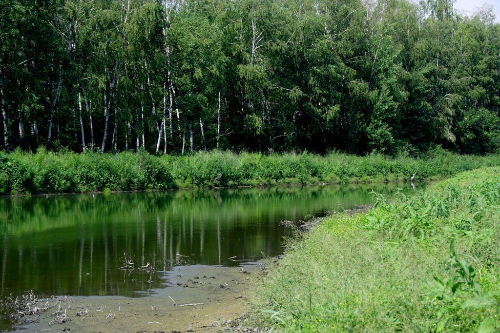 В Ростовской области продлили режим ограничения пребывания в лесах