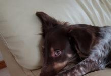 Собака//Фото: пресс-служба администрации Ростова