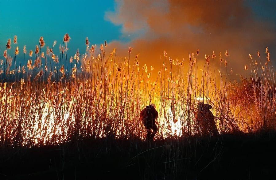 Пожар камыша//Фото: МЧС России по Ростовской области