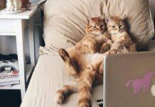 Коты у ноутбука//Фото: fi.pinterest.com