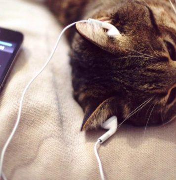 Кот слушает музыку//Фото: dnpr.com.ua