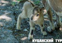 Кубанский тур//Фото: Ростовский зоопарк