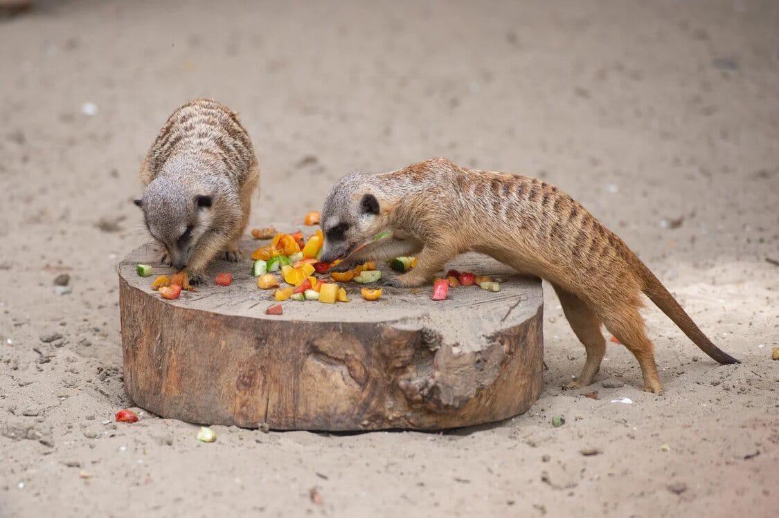 //Фото: Ростовский зоопарк