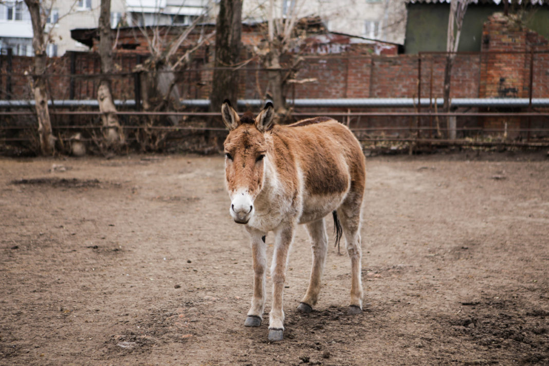 Пони//Фото: Екатерина Мацкиева «Городской репортер»