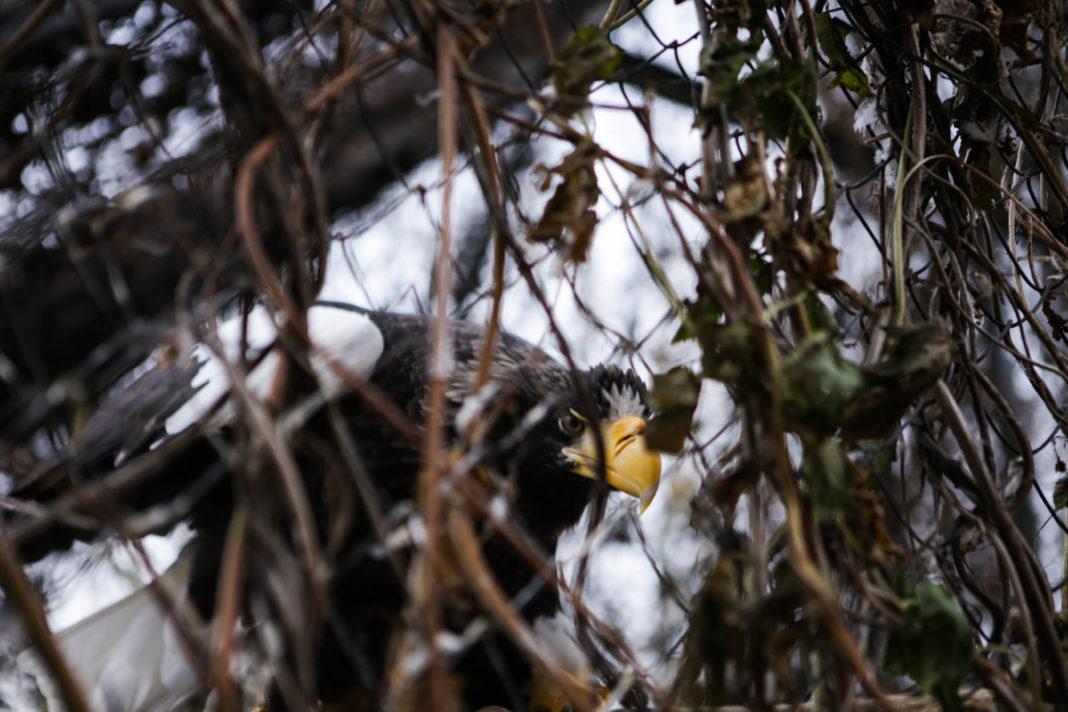 Черные гриф//Фото: Екатерина Мацкиева «Городской репортер»